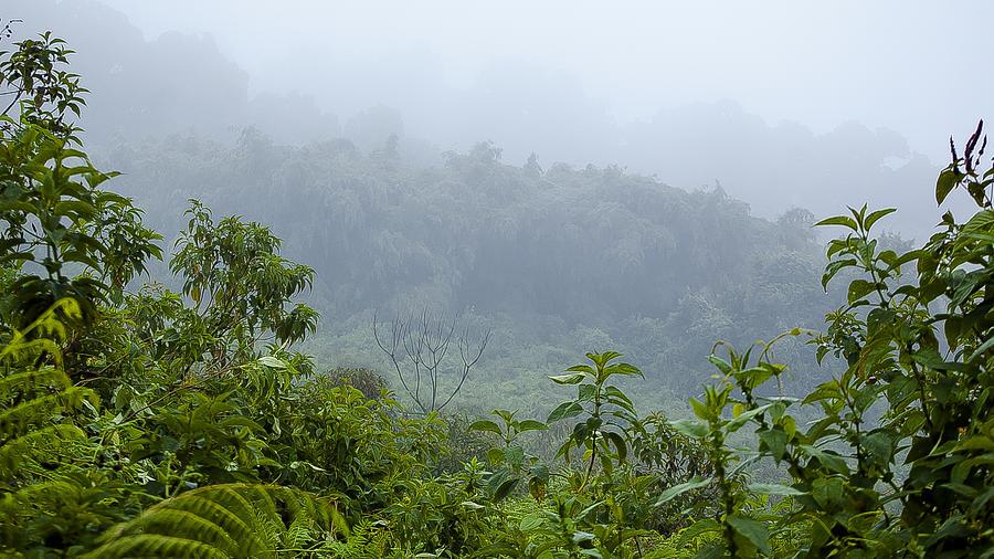 Rwanda Photograph - Misty Mountains by Paul Weaver
