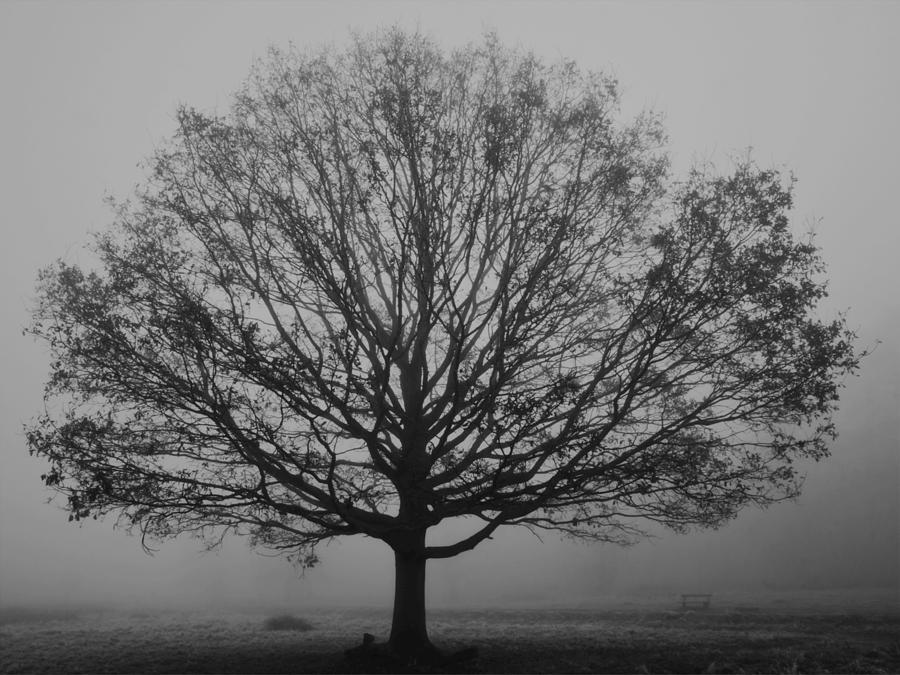 Misty Nature Photograph