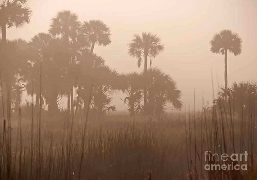 Foggy Photograph - Misty Palmettos by Roy Thoman