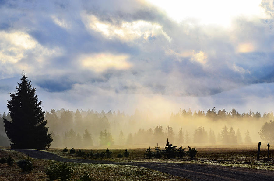 Landscape Photograph - Misty Spring Morning by Annie Pflueger