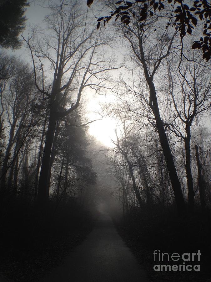 Eerie Photograph - Misty Trail by Stephanie  Varner