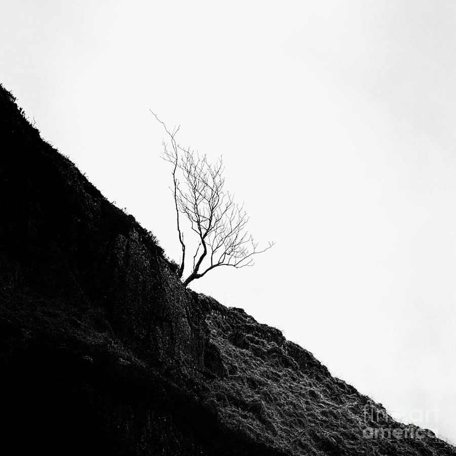 Cold Photograph - Misty Tree Glen Etive by John Farnan