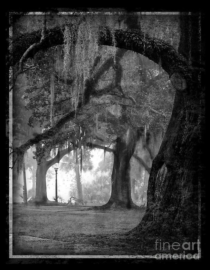 Oak Trees Photograph - Misty Walk Through The Oak Trees by Jeanne  Woods