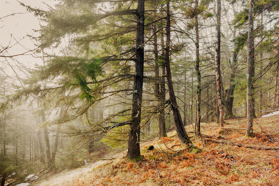 New Hampshire Photograph - Misty Woodland by Robert Clifford