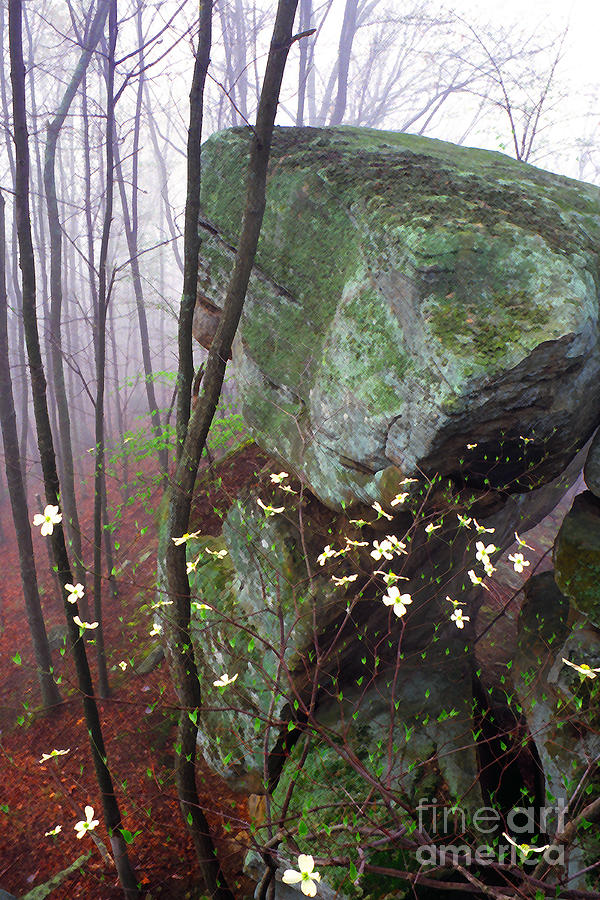 Usa Photograph - Misty Woods by Thomas R Fletcher