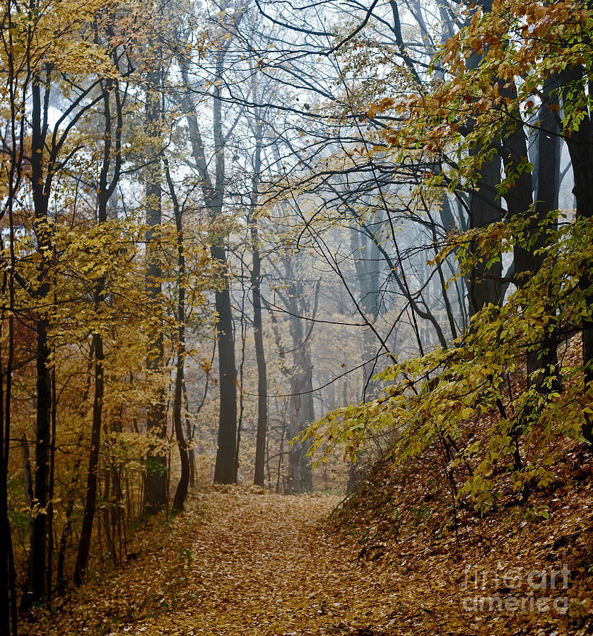 Autumn Photograph - Misty Yellow by Barbara McMahon