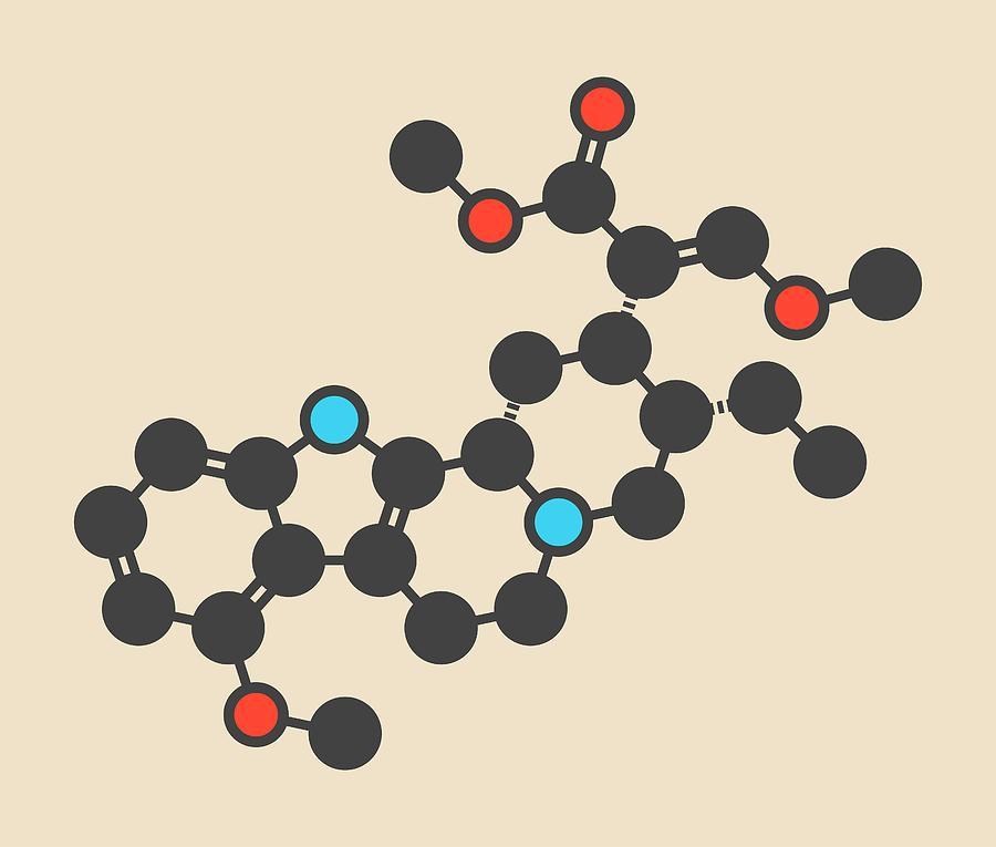 Molecular Model Photograph - Mitragynine Molecule by Molekuul/science Photo Library