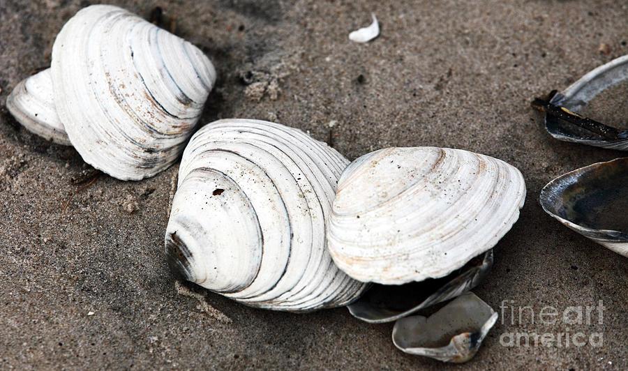 Shells Photograph - Mixed Shells by John Rizzuto