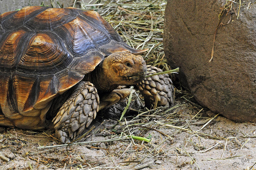 Tortoise Photograph - Mobile Home by Jay Walshon MD