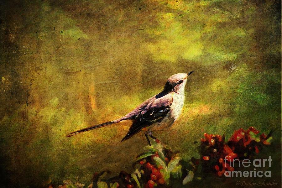 Mockingbird Have You Heard... Digital Art
