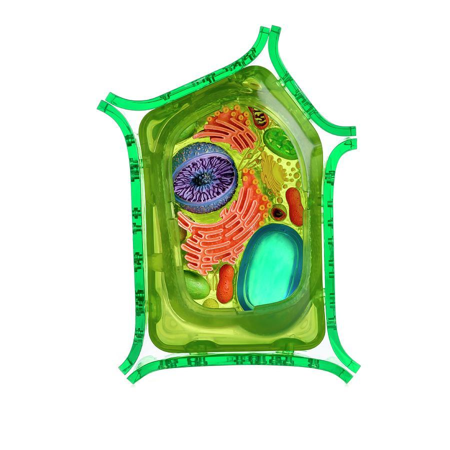 тюмень клетка растения названия аркадия новая электронная