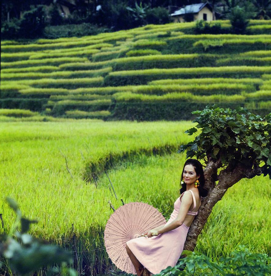 Model Wearing Larry Aldrich In Rice Field Photograph by Henry Clarke