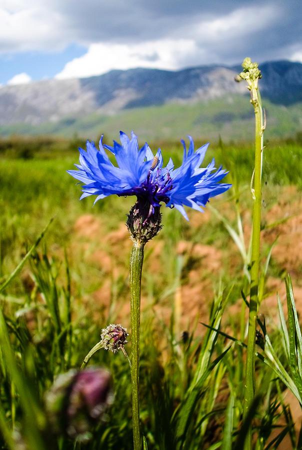 Flower Photograph - Modest Beauty by Eliza Donovan