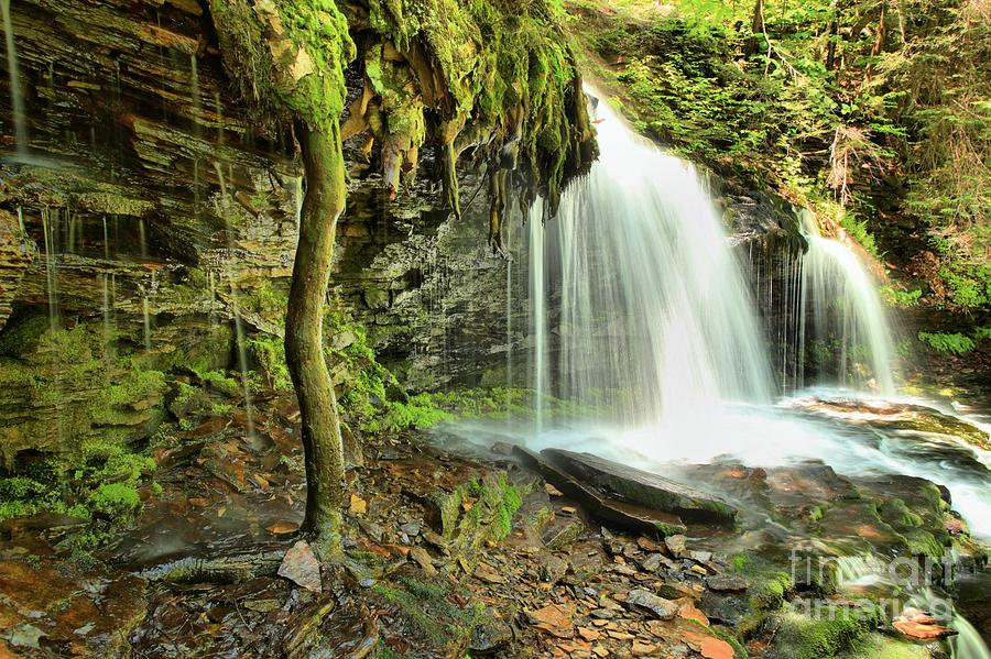 Mountain Waterfall Photograph - Mohawk Falls At Ricketts Glen by Adam Jewell