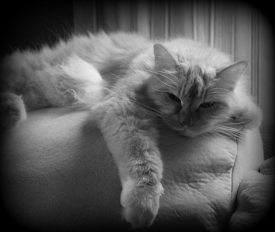 Cat Photograph - Mollie by Carolyn Ricks