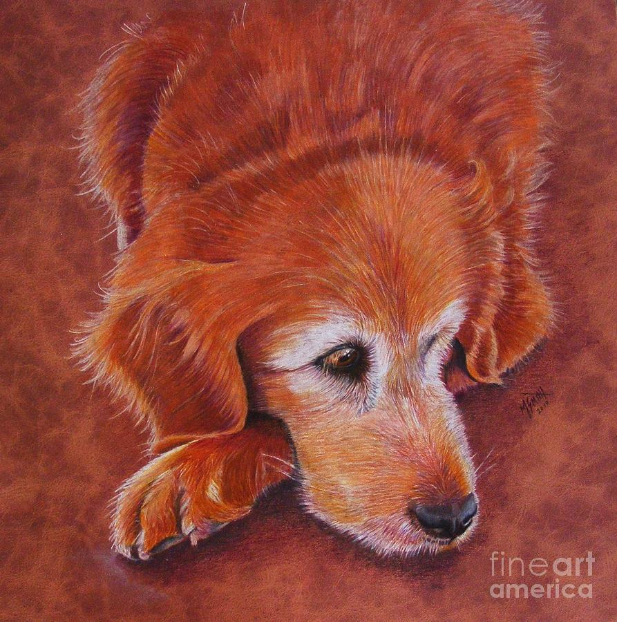 Golden Retriever Drawing - Mollie by Marilyn Smith