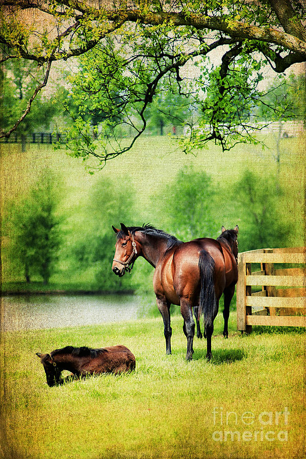 Animal Photograph - Mom And Foal by Darren Fisher