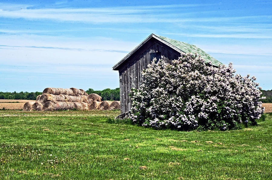 Barn Photograph - Moms Lilac Barn by Cheryl Cencich