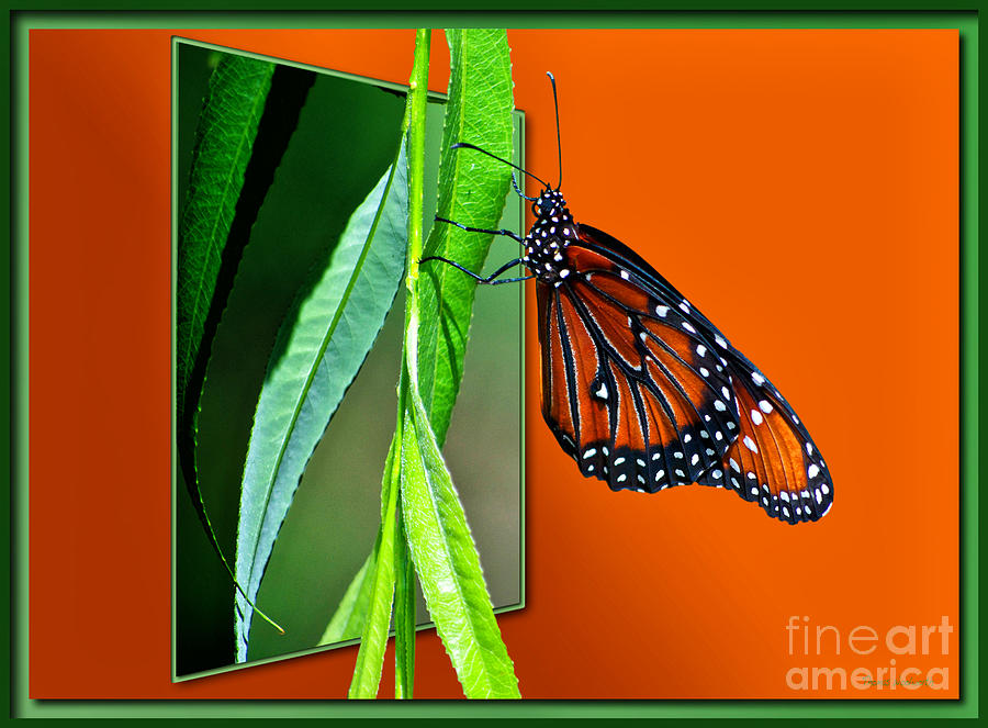 Il Photograph - Monarch Butterfly 01 by Thomas Woolworth