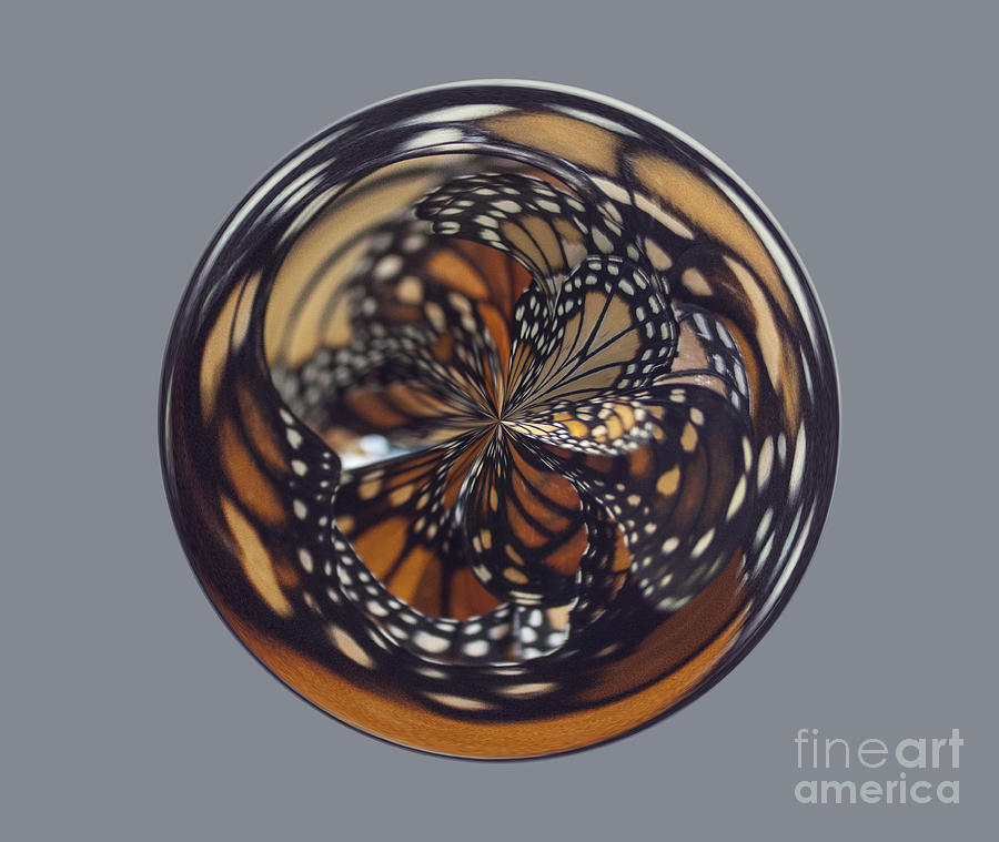 Orb Photograph - Monarch Butterfly Abstract by Darleen Stry