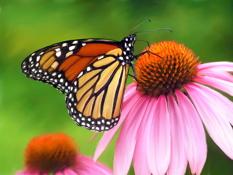 Monarch Butterfly Painting - Monarch Butterfly by Christina Rollo