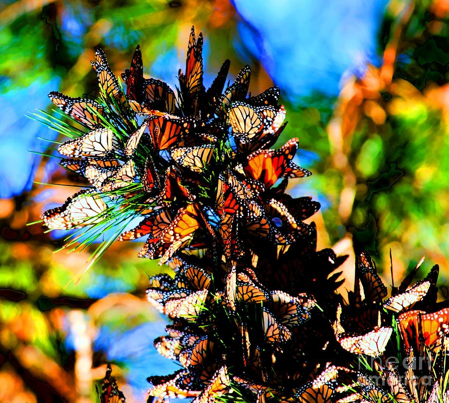 Butterfly Photograph - Monarch Butterfly Migration by Tap On Photo