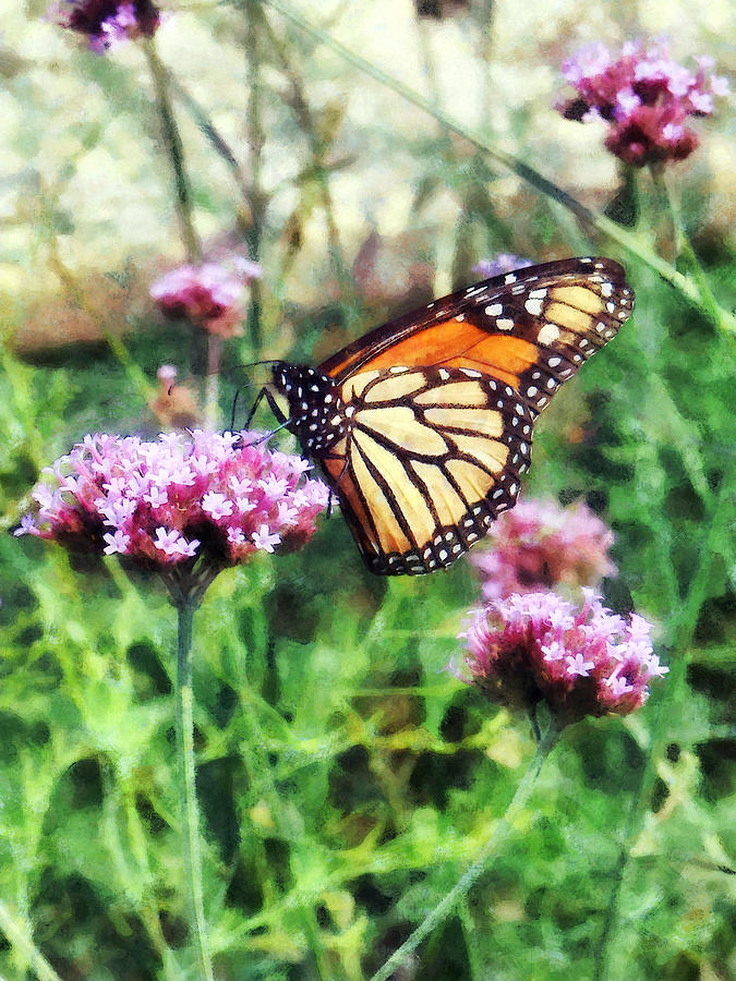 Butterfly Photograph - Monarch Butterfly On Pink Lantana by Susan Savad