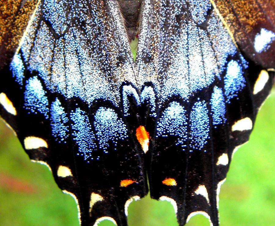 Monarch Butterfly Photograph - Monarchs Blue Glow by Kim Galluzzo Wozniak