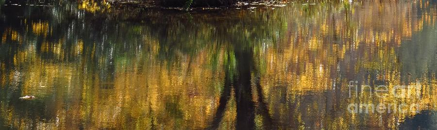 Nature Photograph - Monet At The Biltmore by Anita Adams