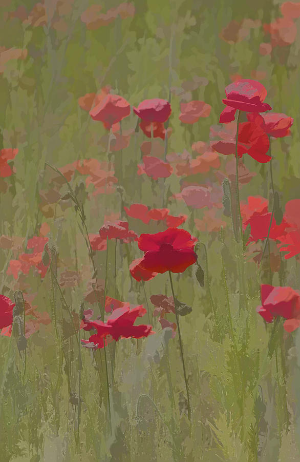 Abstract Photograph - Monet Poppies by David Letts