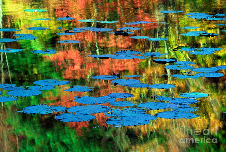 America Photograph - Monet Reflection by Inge Johnsson