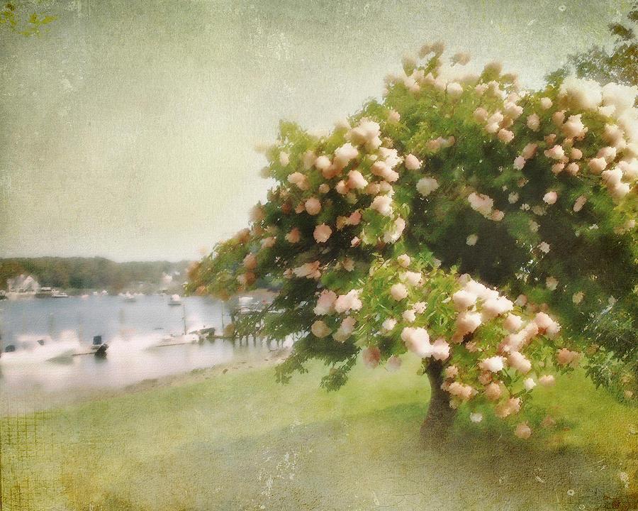 Landscape Photograph - Monets Tree by Karen Lynch