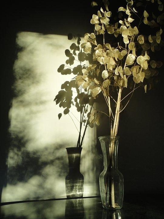 Plant Photograph - Money Plants Really Do Cast Shadows by Guy Ricketts