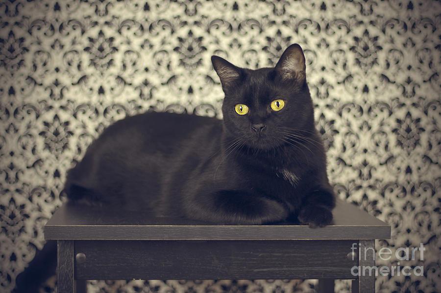 Cat Photograph - Mongo The Robust Cat by Jennifer Ramirez