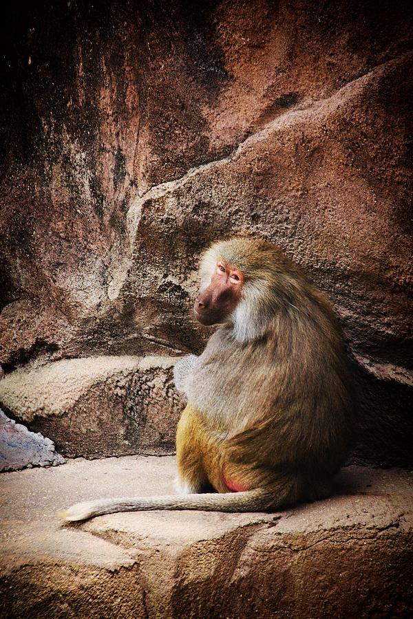 Monkey Photograph - Monkey Business by Karol Livote