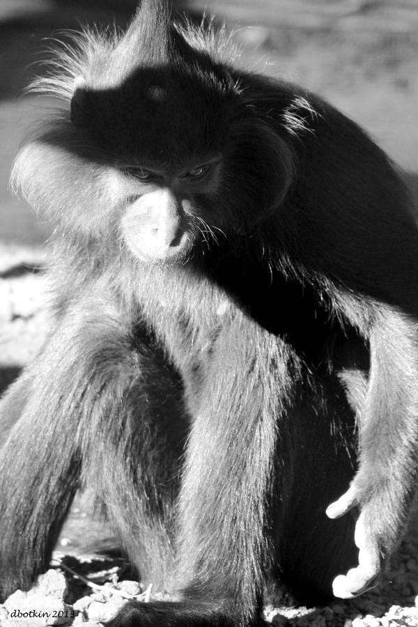 Zoo Photograph - Monkey See Monkey Do by Dick Botkin