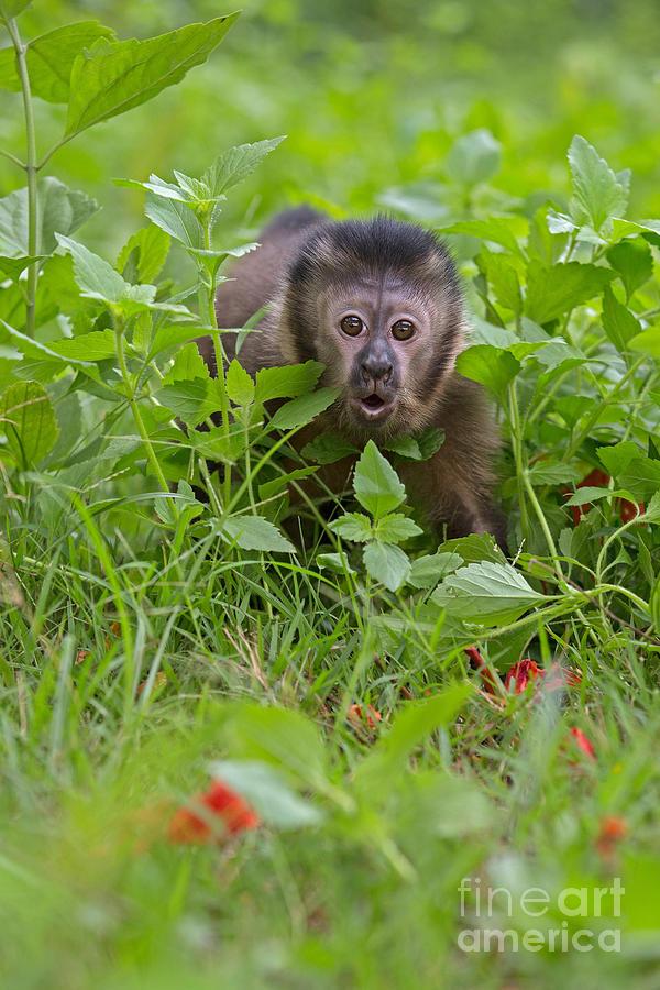 Adorable Photograph - Monkey Shock by Ashley Vincent