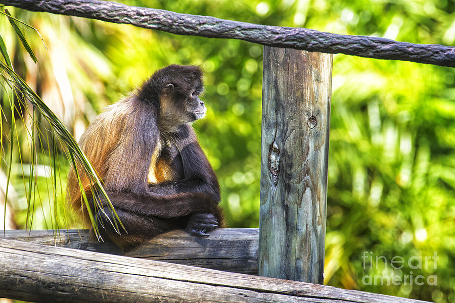 Monkey Photograph - Monkey Sitting by Stephanie Hayes