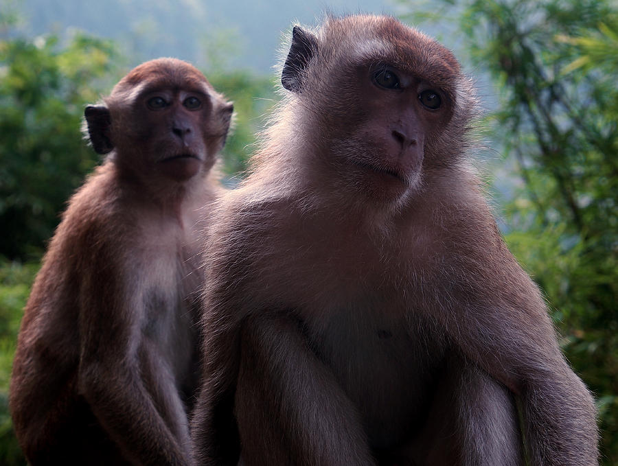 Monkeys Attention Photograph