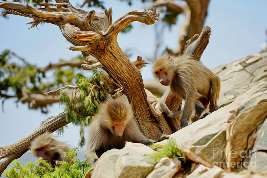 Monkey Photograph - Monkeys On Mountain by George Paris