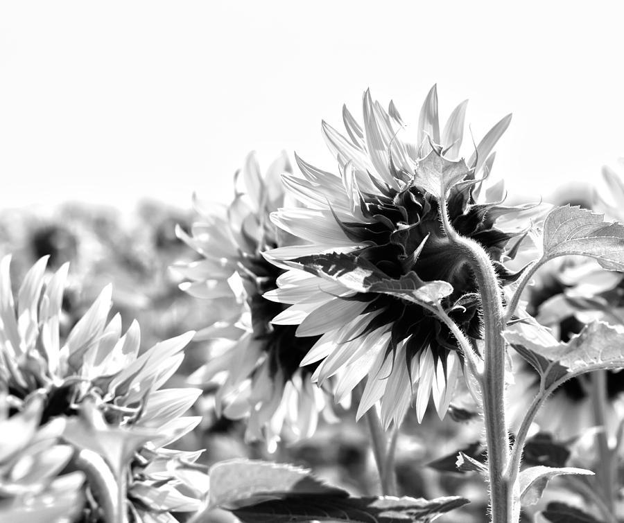 Closed Photograph - Monochrome Summer by Georgia Fowler