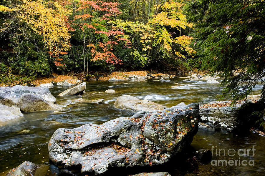 Usa Photograph - Monongahela National Forest Cranberry River by Thomas R Fletcher