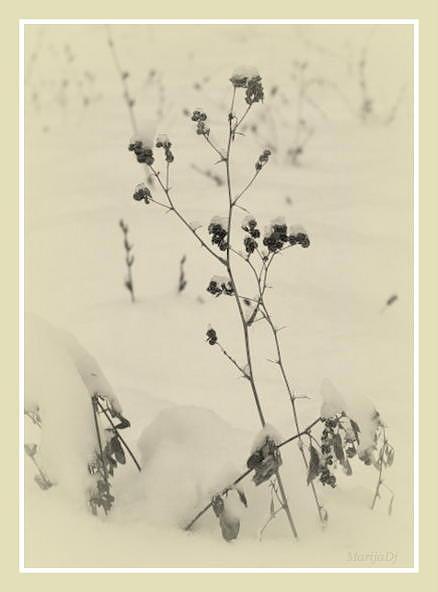Nature Photograph - Monotonous Day by Marija Djedovic