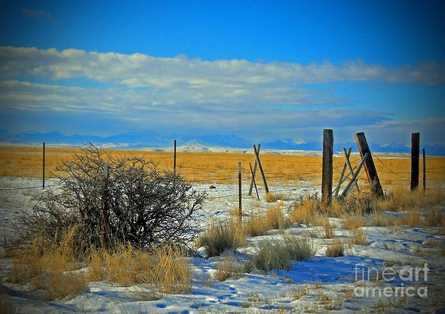 Montana Photograph - Montana Fencerow by Desiree Paquette