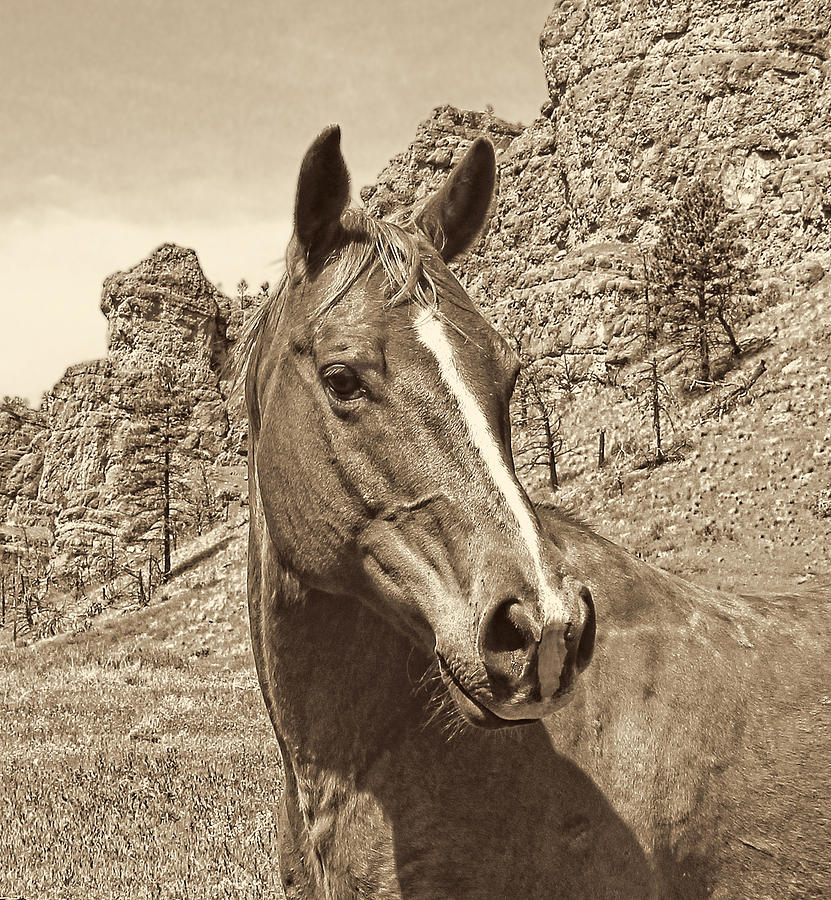 Horse Photograph - Montana Horse Portrait In Sepia by Jennie Marie Schell