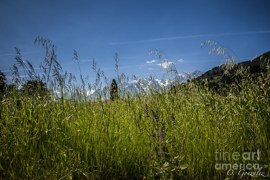 Montanas Photograph by Omar Gonzalez