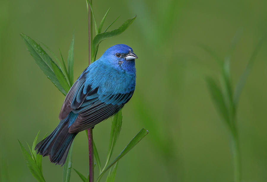 Blue Photograph - Mood Indigo by Greg Barsh