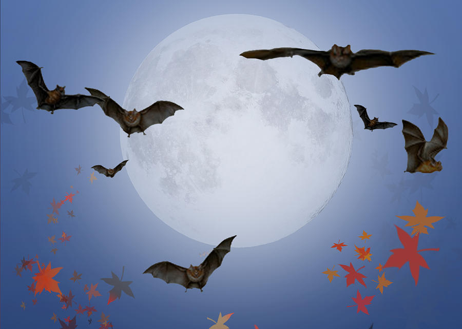 Halloween Digital Art - Moon And Bats by Melissa A Benson