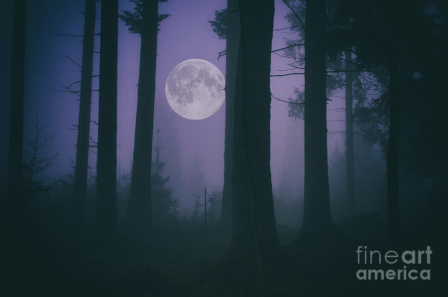 Moon And Fog In A Forest Photograph