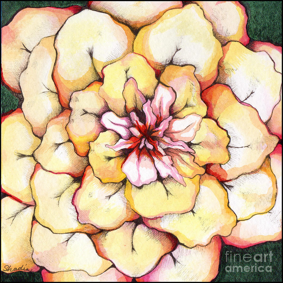 Bloomers Painting - Moon Flower out of the bloomers and onto the bloom by Shadia Derbyshire